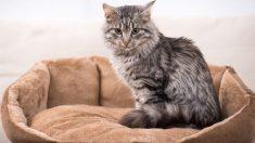 Guía de pasos para aprender a hacer una cama para gatos