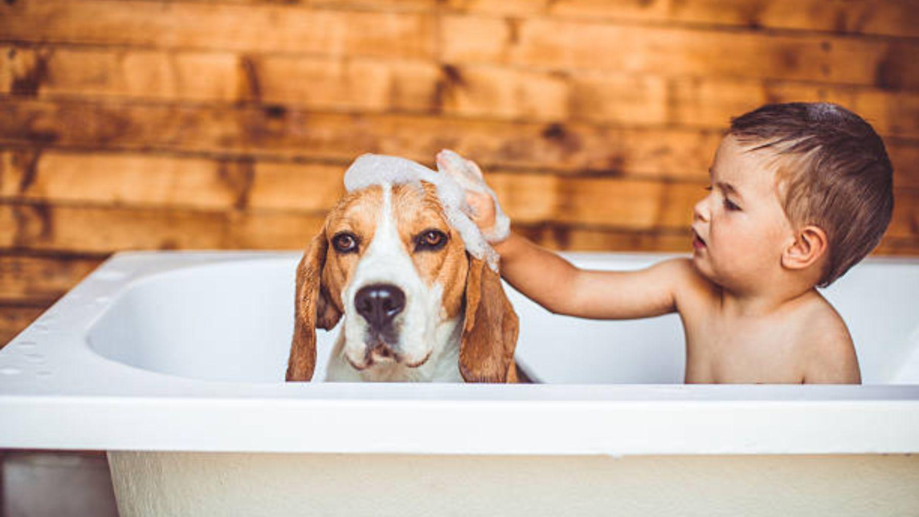 Descubre qué hacer y cómo evitar los celos de los perros con respecto al bebé