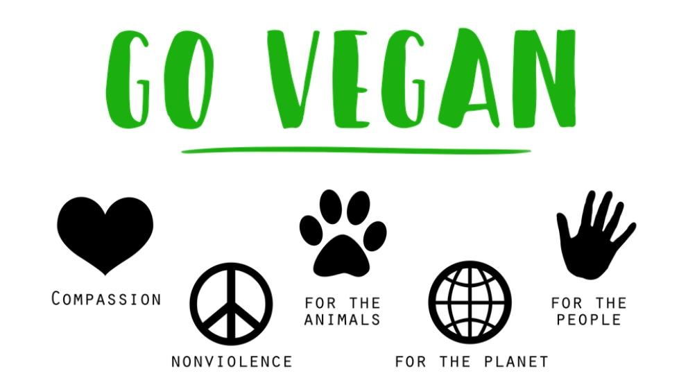 Los muebles veganos, toda una novedad.