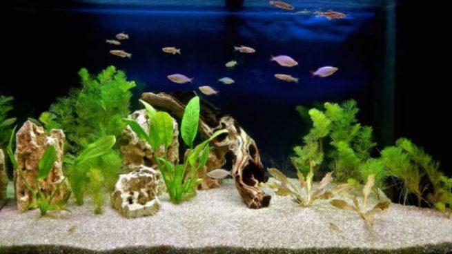 Cómo decorar un acuario paso a