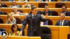 pedro-sanchez-senado-655×368 copia