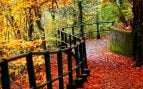curiosidades sobre el otoño que no conocias