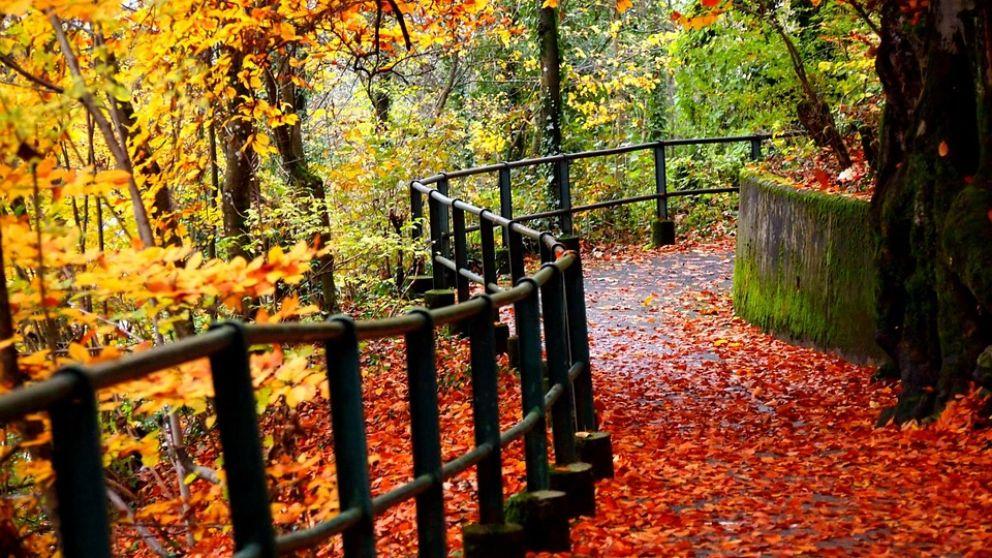 Descubre varias curiosidades sobre el otoño que no conocías