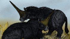 El fósil que demuestra que los unicornios fueron reales