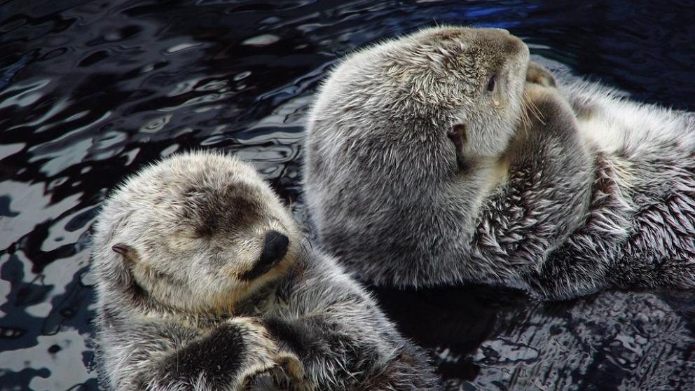 Conoce más sobre la foca monje.