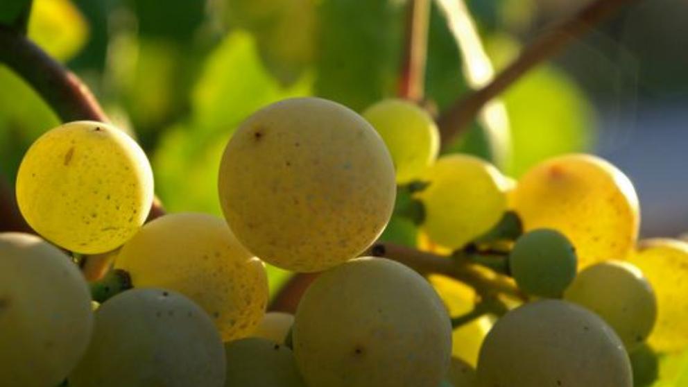 Consumir frutas de temporada ofrece beneficios