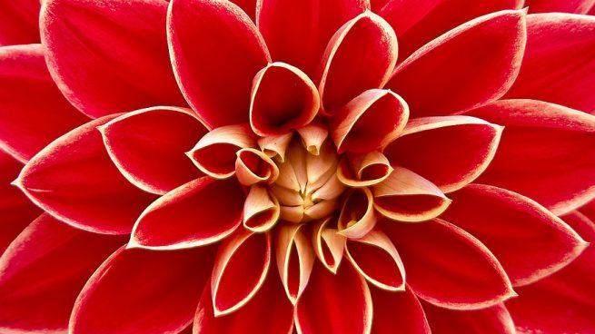 Conoce Las Flores Exoticas Mas Bonitas Del Mundo