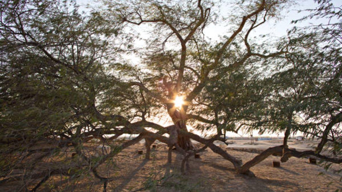 Descubre cuál es el significado del árbol de la vida