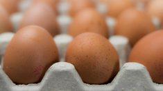 Beneficios de comer huevo durante el embarazo