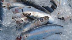 Ventajas de comer sardinas en el postparto