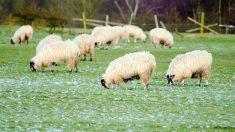 Así es la ganadería ecológica