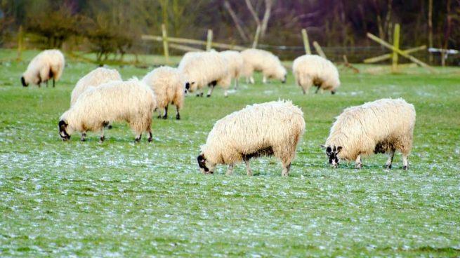 ganadería ecológica