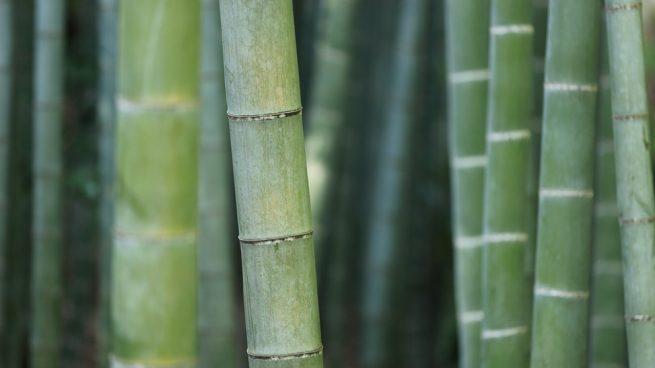 calcetines de bambú