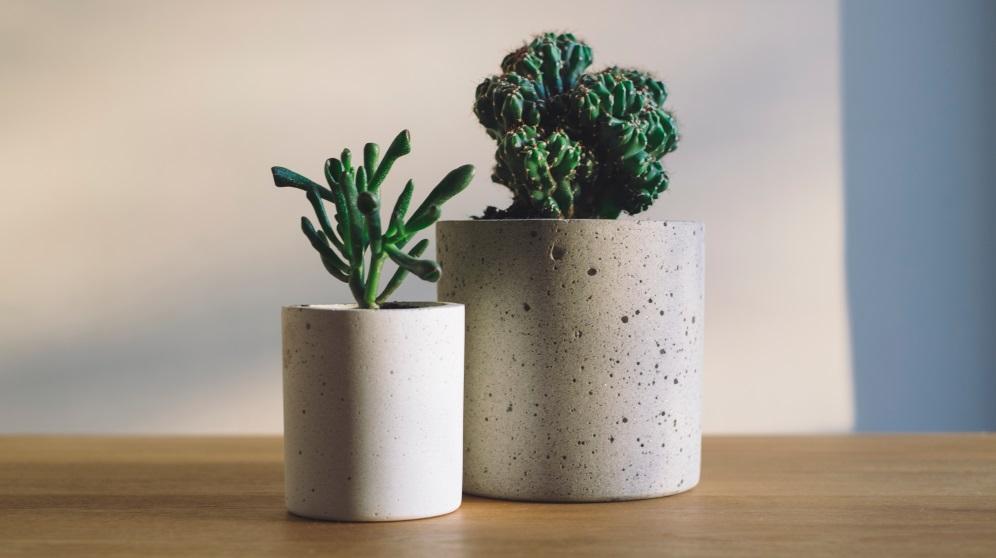 Los cactus pueden darle un toque muy especial a la decoración