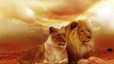 ¿Por qué hoy es el día mundial de los animales?