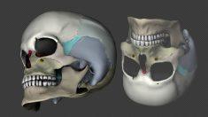 Aprende cuáles son los huesos del cráneo y la cabeza