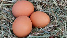 Estas son algunas de las curiosidades más destacadas de los huevos