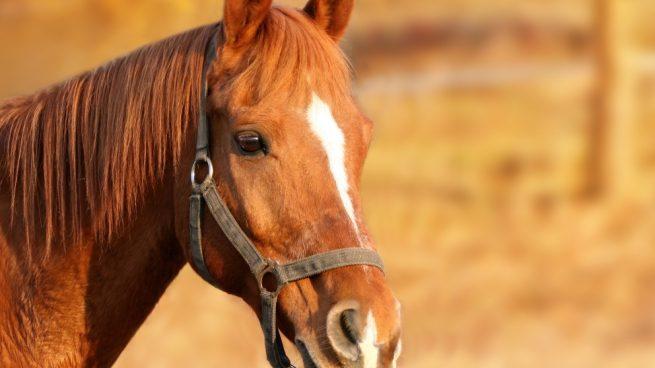 cuidar un caballo