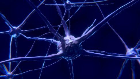 Conoce más sobre la sinapsis