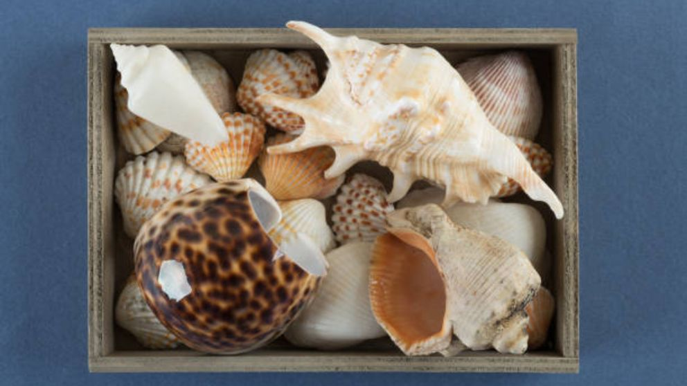 Los pasos para saber cómo hacer cuadros con conchas de mar