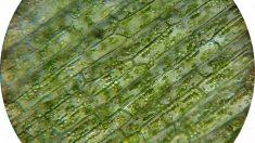 La célula vegetal, una de las más destacadas de la naturaleza.