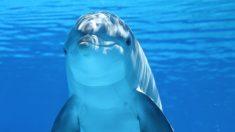 Saber cómo se desplazan los delfines es de lo más curioso.
