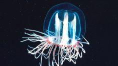 Conoce a los animales más longevos del mundo según la ciencia