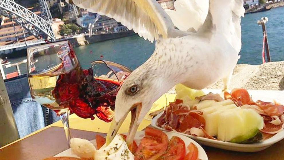 Una gaviota 'asaltó' la mesa donde comía Iker Casillas. (@ikercasillas)