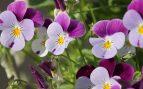 flores para plantar en otoño