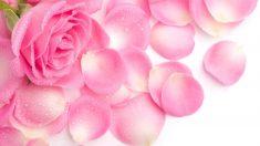 Conservar los pétalos de rosa es posible con varios trucos