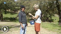 'Volando voy' intenta paliar 'la seca', una plaga que afecta al Parque Natural de la Sierra de la Aracena.