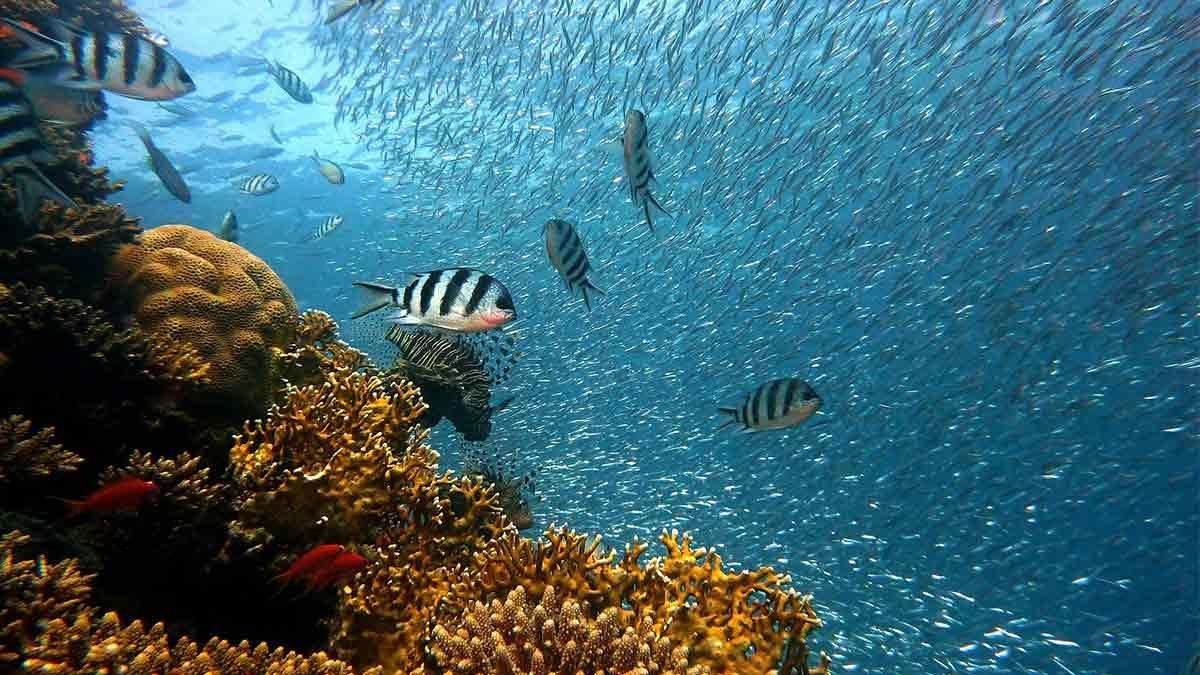 Lusta de mares y océanos del mundo