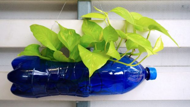 C mo reciclar botellas de pl stico para hacer macetas for Como criar cachamas en tanques plasticos