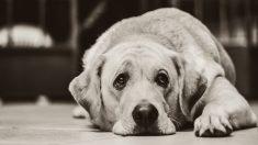 Saber curar heridas es indispensable si tienes un perro