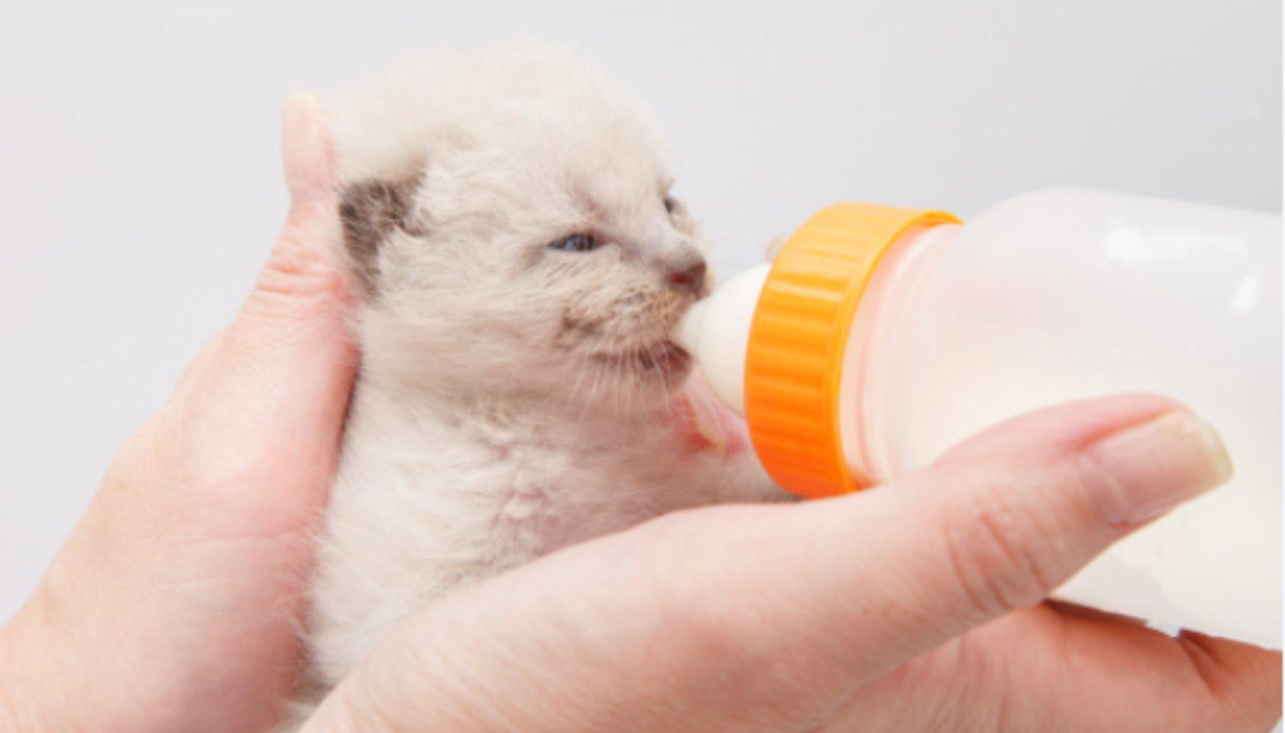 leche gatos