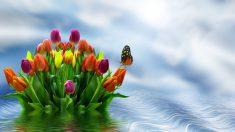 Los tulipanes de agua son ideales para cualquier ambiente