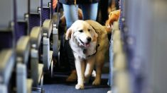 Vajar en avión con mascotas es posible en muchas compañías