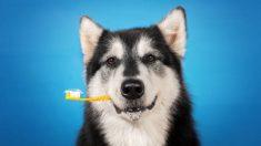 Pasos para hacer una pasta de dientes para perro casera