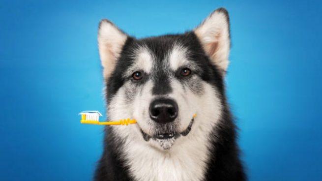 pasta de dientes para perro casera