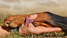 Cortar las uñas a un perro no tiene por qué ser un mal rato