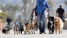 Pasear varios perros a la vez no tiene por qué ser un caos