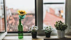 Consejos para aumentar el nivel de oxígeno en casa