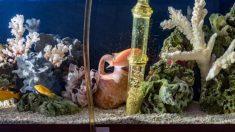 Pasos para saber cómo cuidar un acuario de peces