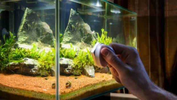 cuidar un acuario