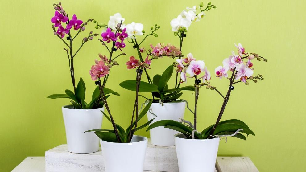 Las plantas se pueden combinar por medio de macetas