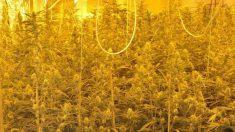 Marihuana incautada por la Policía Nacional.