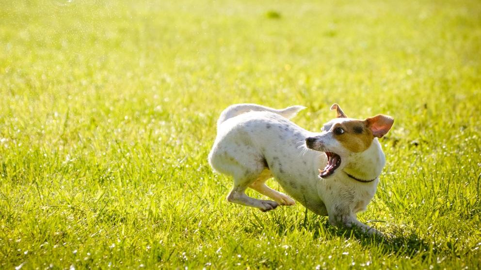 La conducta de un perro se puede modificar con varias rutinas