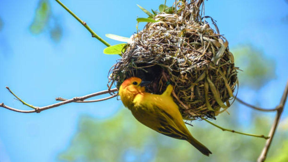 Descubre los tipos de nidos que hacen las aves y otros animales