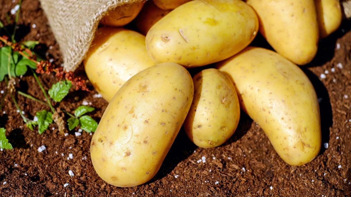 La dieta de la patata promete adelgazar 5 kilos en 2 semanas (1)