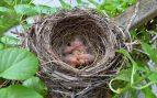 nidos de aves